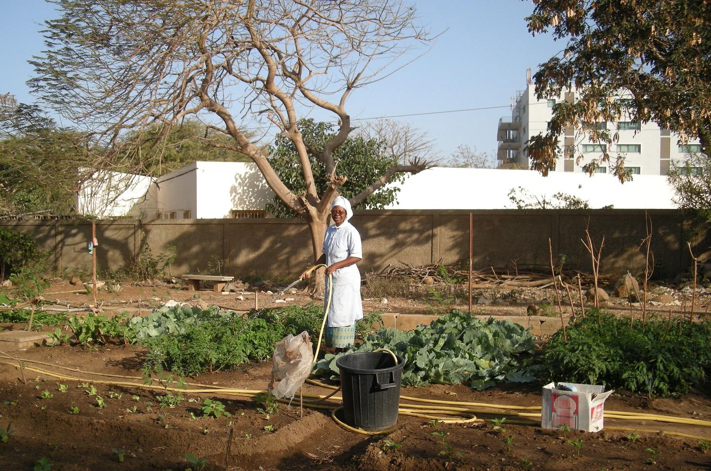 Travail au jardin, dans le potager